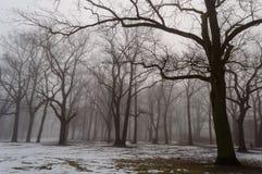 薄雾的多雪的冬天城市公园 免版税库存照片