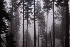 薄雾的森林 免版税库存照片