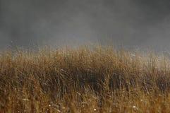 薄雾的满地露水的植物 免版税库存图片