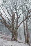 薄雾结构树冬天 免版税库存图片