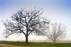 薄雾结构树 免版税图库摄影