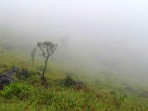 薄雾结构树 库存照片