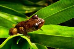 薄雾青蛙在家 免版税图库摄影