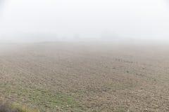 薄雾 免版税图库摄影