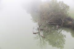 薄雾 免版税库存照片
