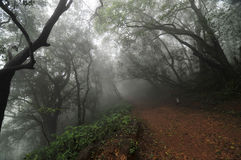 薄雾 图库摄影