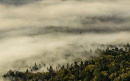薄雾 库存图片
