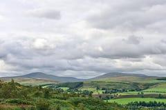薛维尔种羊英国小山northumberland英国 图库摄影