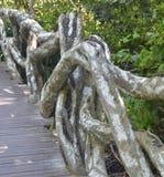 藤和根自然桥梁热带树,中国,海南岛,公园Yanoda栏杆和树干  库存图片