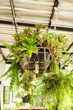 藤和混合植物垂悬的装饰地方 免版税库存图片