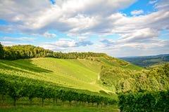 藤在一个葡萄园里在秋天-在收获,施蒂里亚奥地利前的葡萄酒 库存照片