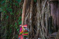 藤墙壁和树根源,五颜六色的织品 库存图片