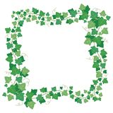 藤常春藤绿色留下框架 上升的植物绿叶长方形边界 花卉爬行物叶子被隔绝的传染媒介 库存照片