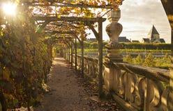 藤弧在庭院里 图库摄影