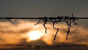 藤弯曲处剪影在导线的在与多云天空的日落 图库摄影