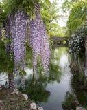 紫藤植物和在距离的历史的桥梁在雀鳝 库存图片