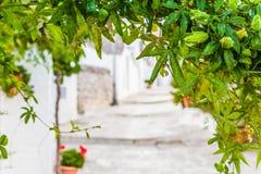 藤植物和阿尔贝罗贝洛Trulli房子在普利亚在意大利 库存图片