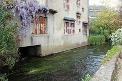 紫藤沿房子的门面增长建造在小河的边缘在Pont阿文(法国) 免版税库存照片