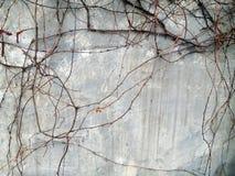 藤灰色墙壁 免版税库存照片