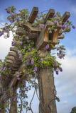 紫藤特写镜头在格子的 库存照片