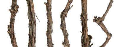 藤的汇集干燥分支 免版税库存照片