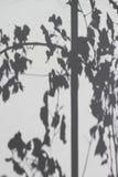 藤的阴影在白色膏药墙壁离开 免版税库存图片