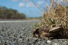 藤茎停止的蟾蜍 免版税图库摄影