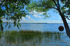 藤茎和树在Ivankovskoye水库海岸在环境旅馆Vetochka 库存图片
