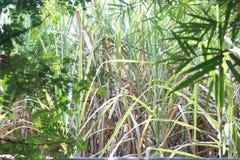 藤茎庭院 库存图片