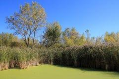藤茎沿海浮萍增长的长满的池塘主街上 免版税库存照片