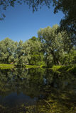 藤茎沿海浮萍增长的长满的池塘主街上 免版税库存图片