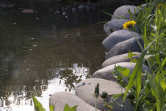 藤茎沿海浮萍增长的长满的池塘主街上 免版税图库摄影