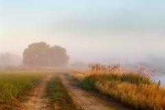 藤茎灌木,橡木,土在一个有薄雾的河岸的乡下公路 免版税库存图片