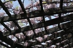 紫藤荫径 免版税库存照片