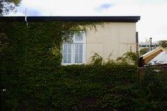 藤隐蔽的议院外部与白色窗口 免版税库存照片