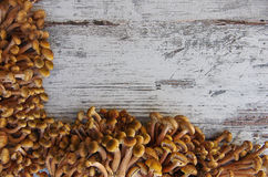 蘑菇'蜜环菌属mellea'在桌上 免版税图库摄影