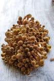 蘑菇'蜜环菌属mellea'细节在桌上 免版税图库摄影