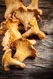 蘑菇。 黄蘑菇 库存图片