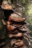 蘑菇。 库存照片