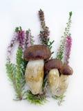 蘑菇三 免版税库存照片