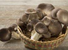 蘑菇不丹 图库摄影