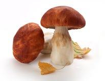 蘑菇二白色 库存图片