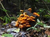 蘑菇剪影。 免版税库存照片