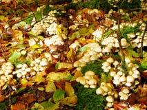 蘑菇和叶子在秋天 免版税图库摄影