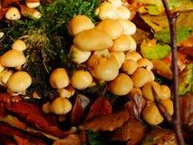 蘑菇和叶子在秋天 免版税库存图片