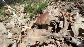 蘑菇和叶子 免版税库存图片