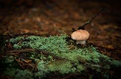 蘑菇和地衣在森林地板上 免版税库存照片