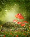 蘑菇和岩石 库存图片