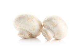 蘑菇和未加工的蘑菇在白色背景 免版税库存照片