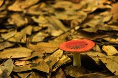 蘑菇和树桩 免版税库存图片